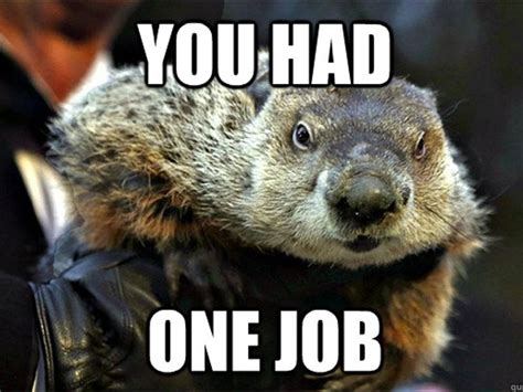 groundhog day meme 12 goofy things you didn t about groundhog day news