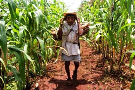 imagenes agricultura maya la milpa la agricultura de los mayas de yucat 225 n la zona