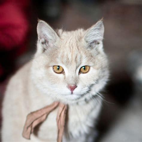 Cat Cat cat national geographic