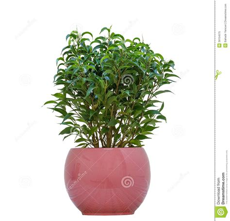 small plant small plant stock photo image 39154575