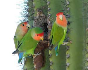 mexicanlove bird welcome arizona field ornithologists