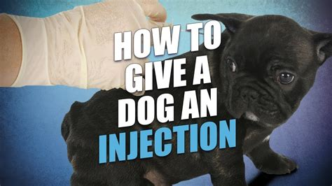 how to give a puppy a how to give a an injection at home the easy way bravecto flea
