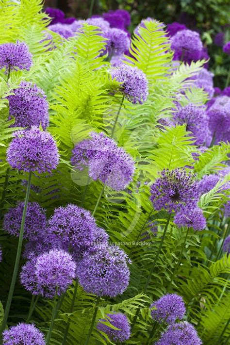 flowers for shade garden best 25 shade plants ideas on plants for
