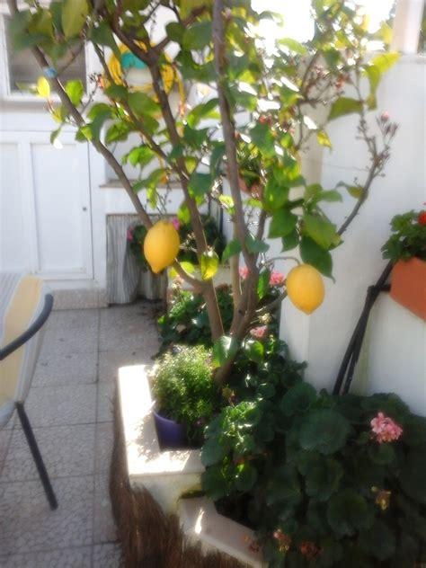 plantas para patio entre patios y plantas como hacer un patio cordob 233 s
