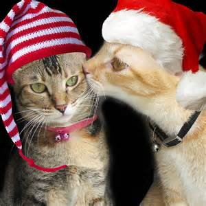 christmas gift for cat lovers friends cats need