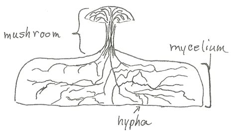 fungi diagram what makes a fungus a fungus jake s nature