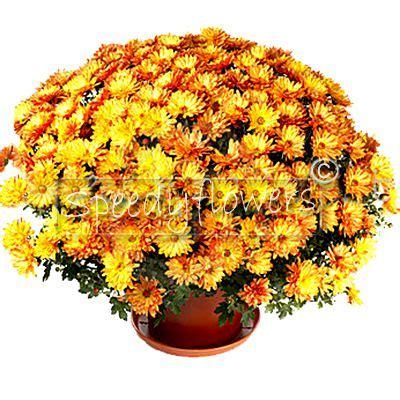 inviare fiori inviare fiori a domicilio spedizione piante domicilio