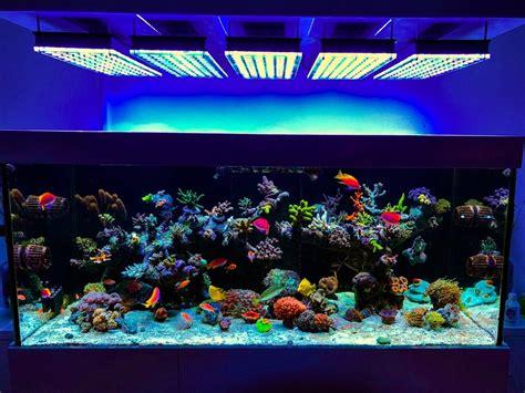 illuminazione acquari aquarium led beleuchtung orphek aquarium led beleuchtung