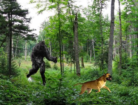 the of bigfoot bigfoot evidence april 2015