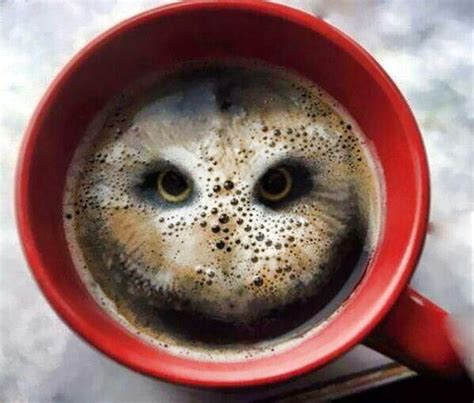 owl coffee new year coffee owl odds and ends