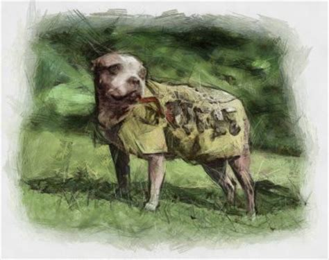 Sgt Stubby Story Sgt Stubby Inspire Your