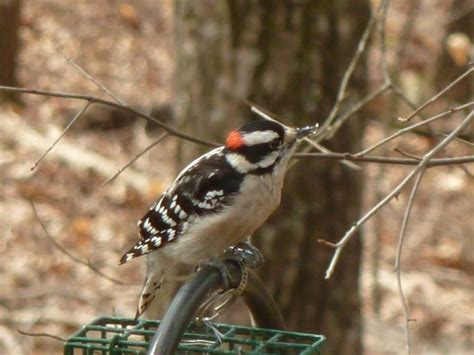 how to keep woodpeckers from damaging your home hgtv