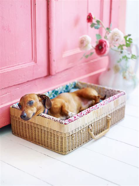 beds for puppies 14 adorable diy dog bed cheap pet beds