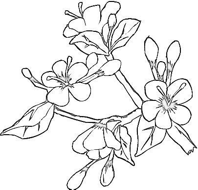 coloring pages of dogwood flowers dogwood coloring download dogwood coloring