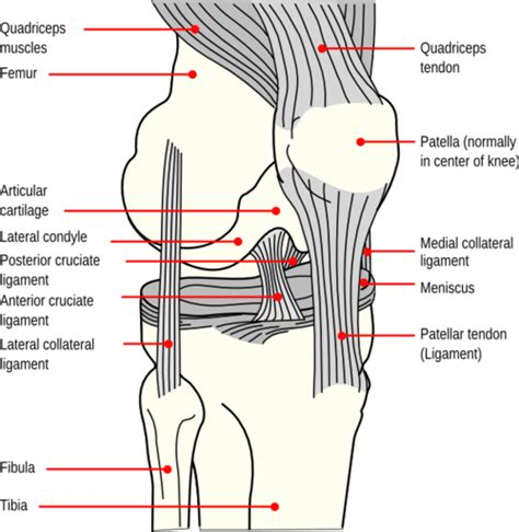 kneecap diagram how to fix a dislocated knee cap the clinic
