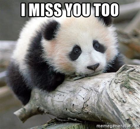 Sad Panda Meme Generator - i miss you too sad panda meme generator