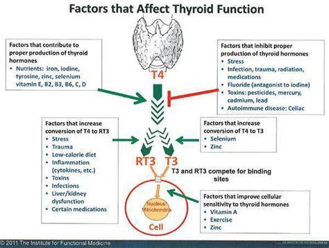 alimentazione e ipertiroidismo ipotiroidismo da eccesso di rt3 alimentazione e nutraceutica