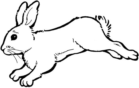 hopping bunny coloring page rabbit bunny clipart black and white free clipart images 2