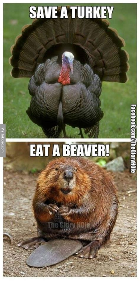 Funny Turkey Memes - save a turkey meme