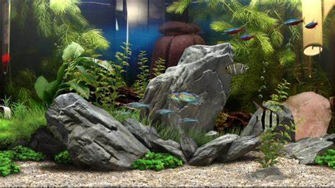 Example of a background (Aquarium 15) used in the rock tank, which is
