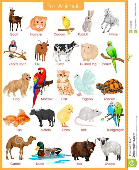 a to z finding a pet for me books image result for pet animals pictures save energy quotes