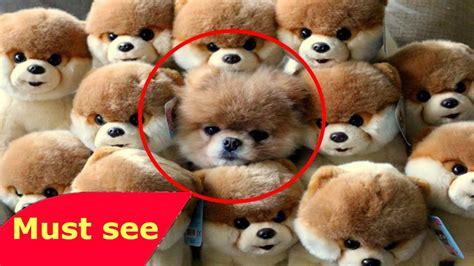 imagenes animales mas tiernos los animales mas bonitos del mundo los animales mas