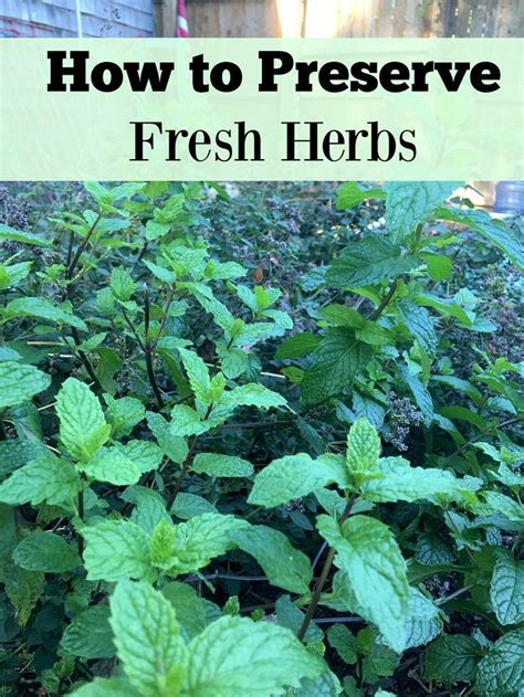 how to preserve fresh herbs you ve herbs and plants