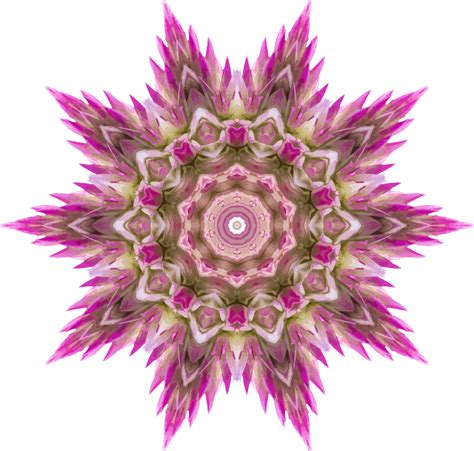 Paint For Office Clipart Wildflower Kaleidoscope 2