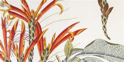 carte fiori mostra quot carte dei fiori quot vivipavia