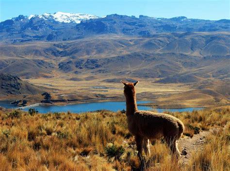 peruvian amazon  machu picchu  including scenic