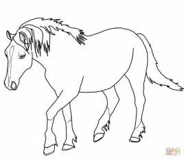palomino welsh horse coloring page free printable