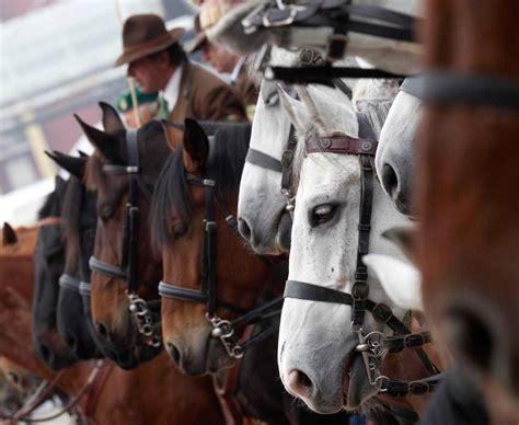 costo ingresso fiera cavalli verona fieracavalli piano della viabilit 224 e servizi della