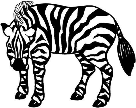 zebra head coloring page zebra head coloring