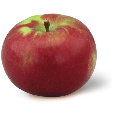 apple york apple varieties of new york state mcintosh ny apple