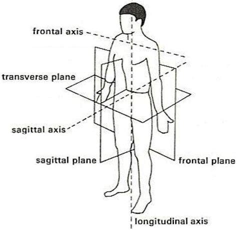 sagittal section definition sensors free full text goniometer crosstalk