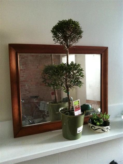 topiary care how to care for a eugenia topiary topiaries lowes and link