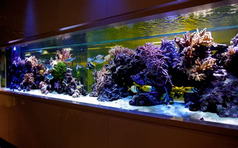aquarium design video aquarium design
