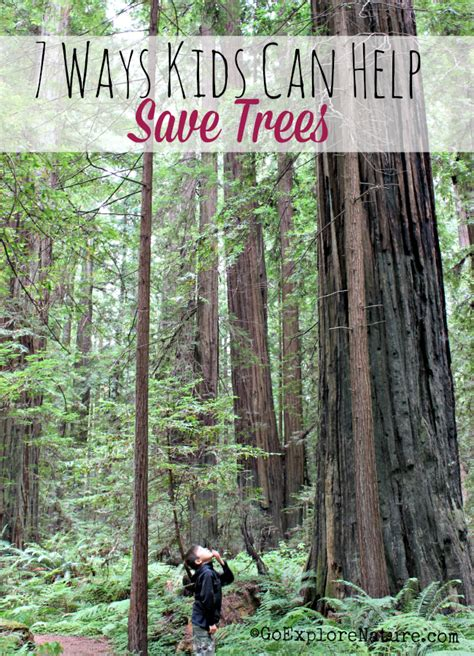 Plant Trees Save Environment Essay by 7 Ways Can Help Save Trees Goexplorenature