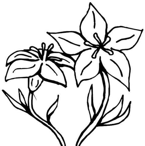 lily flower coloring pages coloring pages