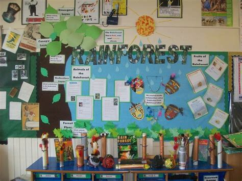ipc themes ks2 17 best images about rainforest displays on pinterest