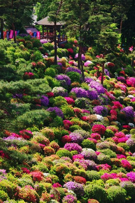 Flower Garden In Japan Azalea Bushes At Shiofune Kannon Temple Tokyo Japan Knockout Landscape Gardens