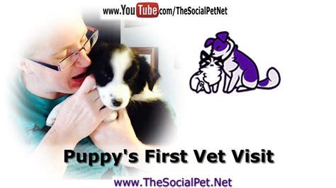 puppy s vet visit puppy s vet visit