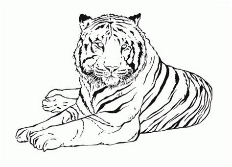 imagenes para pintar tigre fotos de tigre para pintar colorear im 225 genes