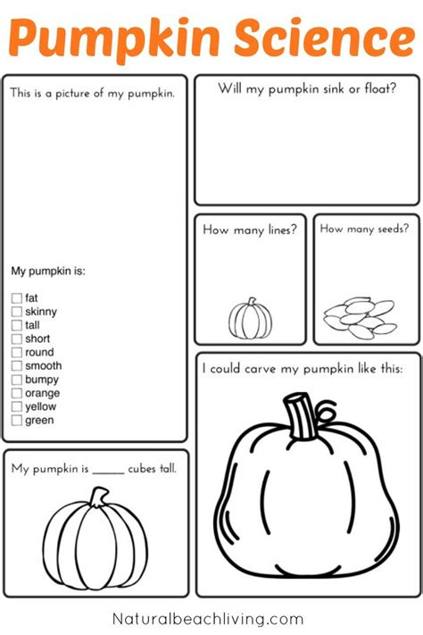 coloring pages of life cycle of pumpkin best 25 kindergarten coloring pages ideas on pinterest