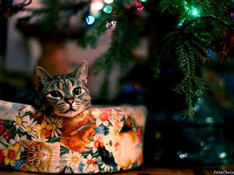 christmas wallpaper 1280x960 cute christmas cat 1280x960 wallpaper