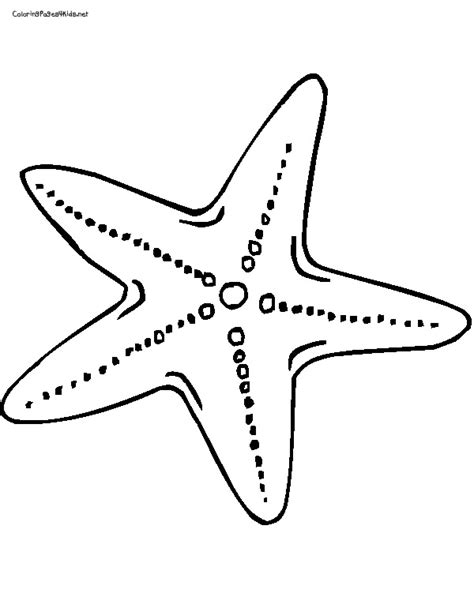 starfish outline clipart best