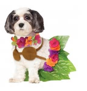 It may be chilly on halloween night but your pup will look carefree