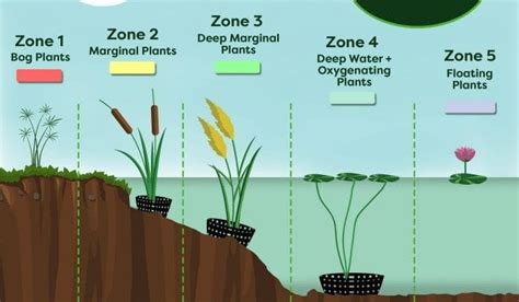 pond plants  beginners guide envii