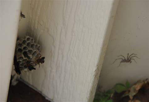 nesting house spider nest in house