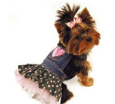 cheap clothes for yorkies 1000 images about clothes for my yorkies on dresses clothing